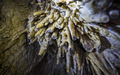 Peştera Şugău – Súgó Barlang